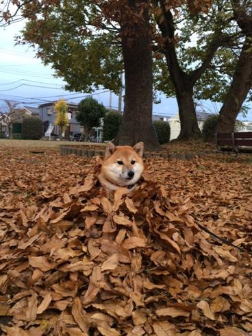disguise master doge